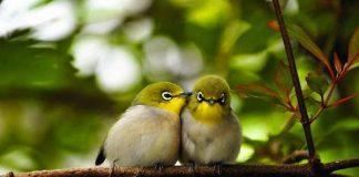 Çocuklar için eğlenceli gerçekler Kuşlar çiş yapmaz bunları biliyor musunuz Kuşlar çiş yapmazlar, sadece kaka yaparlar
