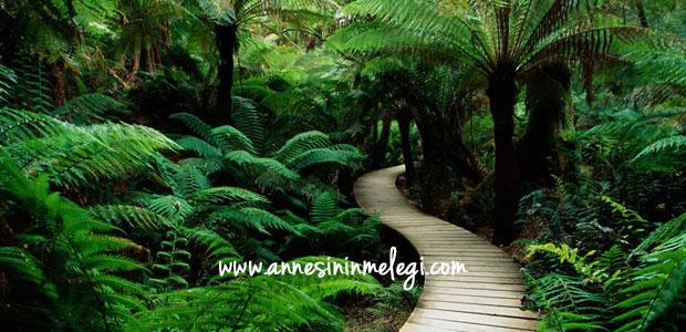 Ücretsiz Çocuk Etkinlikleri: Nezahat Gökyiğit Botanik Bahçesi'nde