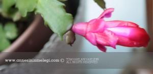 Annesinin Meleğinden Öyküler: Çiçek Hanımların sohbeti