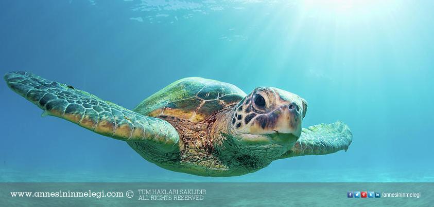 Eğlenceli Gerçekler: Kaplumbağaların dişleri yoktur, kaplumbağalar dişlerini fırçalamaz