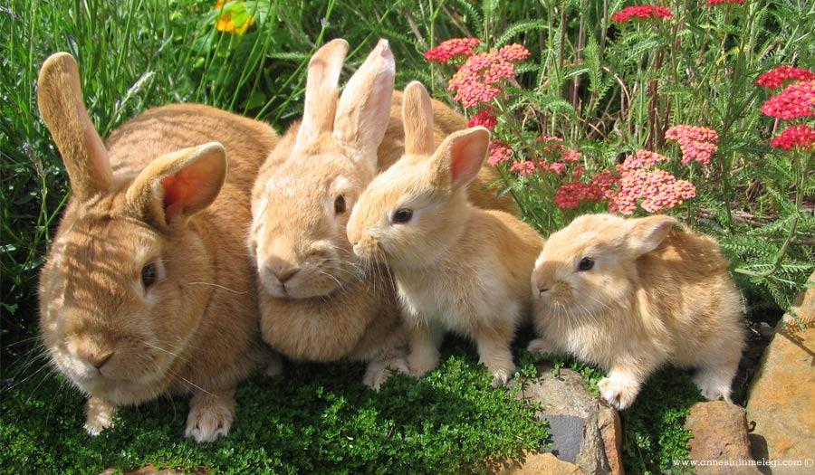 Eğlenceli gerçekler: Tavşanlar kendi dışkısını kakasını yer. acayip bilgiler, ağzınız açık kalabilir, Annesinin Meleği, bilim bilgileri, Bilimania – Bunları Biliyor Muydunuz?, biliyor musun?, bilmediklerimiz, bunları bilin, bunları biliyomusunuz, Bunlari Biliyor Musun, bunları biliyor musunuz, bunları biliyor musunuz facebook, Bunları Biliyormusunuz, bunları biliyormusunuz ilginç bilgiler, bunları biliyormusunuz kitabı, bunları biliyormusunuz komik, bunları biliyormusunuz köşesi, bunları biliyormusunuz sağlık, bunları biliyormuydunuz ilginç bilgiler, bunu biliyormusunuz, bunu biliyormuydunuz, bunu hiç duydunuz mu, Çocuklar için eğlenceli gerçekler, çocuklarımız için eğlenceli bilgiler, Çocuklarımız için eğlenceli gerçekler, çocuklarımız için ilginç bilgiler, Doğanın Olağanüstü 10 Gerçeği, Doğanın Olağanüstü gerçekleri, Düşündüren şeyler: Bunları Biliyor musunuz? İlginç Bilgiler, eğlenceli bilgiler, eğlenceli bilim, eğlenceli gerçekler, eğlenelim, evde tavşan beslemek, hayvanlar hakkında bilmediğimiz gerçekler, Her güne bir bilgi, ilginç, ilginç bilgiler heyecanlı, ilginç gerçekler, kar nasıl yağar, kar neden yağar, kar yağışı, lapa lapa kar, merak edilenler, sağlık için faydalı dışkılar, şaşıracaksınız, şaşırtıcı, şaşırtıcı bilgiler, Tavşan Besleyeceklere Tavsiyeler, Tavsan kendi bokunu yer mi, tavşanım dışkısını yiiyyooor, Tavşanım idrarını yalıyor, tavşanlar kendi dışkısını yer mi, tavşanlar kendi kakasını yer, tavşanlar kendi pisliğini yer mi, tavşanlar neden dışkılarını yer, tavşanlar neden kakasını yer, Tavşanlar su içer mi?, TAVŞANLARIN DIŞKI YEMESİ, TAVŞANLARIN DIŞKI YEMESİ – TAWŞİ'NİN DÜNYASI, Yavru Tavşan Nasil Bakariz, Yavru Tavşan Nasıl Bakılır, yavru tavşanlar annesinin dışkısını neden yer,tavşan kaka yiyor,tavşan kakası