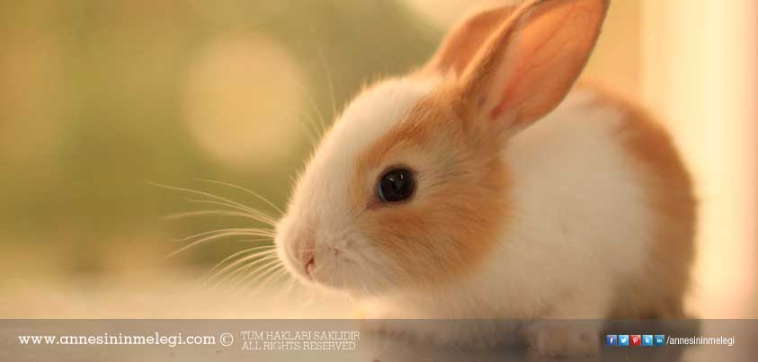 Eğlenceli gerçekler: Tavşanlar kendi dışkısını kakasını yer. acayip bilgiler, ağzınız açık kalabilir, Annesinin Meleği, bilim bilgileri, Bilimania – Bunları Biliyor Muydunuz?, biliyor musun?, bilmediklerimiz, bunları bilin, bunları biliyomusunuz, Bunlari Biliyor Musun, bunları biliyor musunuz, bunları biliyor musunuz facebook, Bunları Biliyormusunuz, bunları biliyormusunuz ilginç bilgiler, bunları biliyormusunuz kitabı, bunları biliyormusunuz komik, bunları biliyormusunuz köşesi, bunları biliyormusunuz sağlık, bunları biliyormuydunuz ilginç bilgiler, bunu biliyormusunuz, bunu biliyormuydunuz, bunu hiç duydunuz mu, Çocuklar için eğlenceli gerçekler, çocuklarımız için eğlenceli bilgiler, Çocuklarımız için eğlenceli gerçekler, çocuklarımız için ilginç bilgiler, Doğanın Olağanüstü 10 Gerçeği, Doğanın Olağanüstü gerçekleri, Düşündüren şeyler: Bunları Biliyor musunuz? İlginç Bilgiler, eğlenceli bilgiler, eğlenceli bilim, eğlenceli gerçekler, eğlenelim, evde tavşan beslemek, hayvanlar hakkında bilmediğimiz gerçekler, Her güne bir bilgi, ilginç, ilginç bilgiler heyecanlı, ilginç gerçekler, kar nasıl yağar, kar neden yağar, kar yağışı, lapa lapa kar, merak edilenler, sağlık için faydalı dışkılar, şaşıracaksınız, şaşırtıcı, şaşırtıcı bilgiler, Tavşan Besleyeceklere Tavsiyeler, Tavsan kendi bokunu yer mi, tavşanım dışkısını yiiyyooor, Tavşanım idrarını yalıyor, tavşanlar kendi dışkısını yer mi, tavşanlar kendi kakasını yer, tavşanlar kendi pisliğini yer mi, tavşanlar neden dışkılarını yer, tavşanlar neden kakasını yer, Tavşanlar su içer mi?, TAVŞANLARIN DIŞKI YEMESİ, TAVŞANLARIN DIŞKI YEMESİ – TAWŞİ'NİN DÜNYASI, Yavru Tavşan Nasil Bakariz, Yavru Tavşan Nasıl Bakılır, yavru tavşanlar annesinin dışkısını neden yer ?