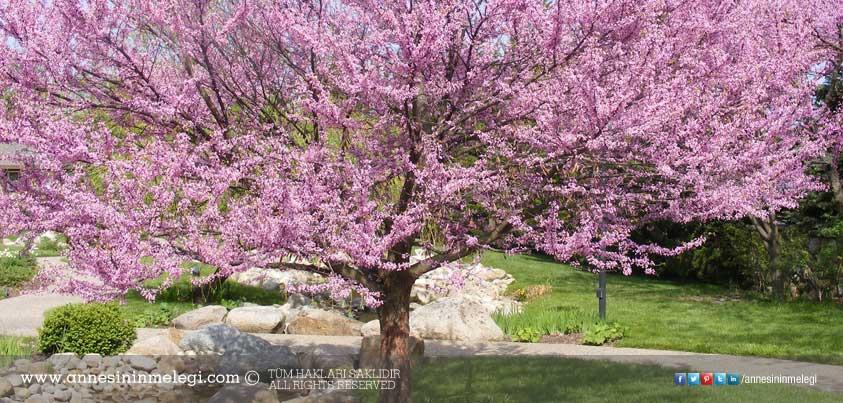 Bugün Hıdırellez ! 5-6 Mayıs Hıdırellez ve Hıdırellez'de neler yapılır?