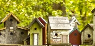 Çocuklar, 'Kuş Evi Boyama Atölyesi'nde soğuk kış günleri öncesinde minik kuşlar için rengarenk ahşap yuva tasarlayacaklar.