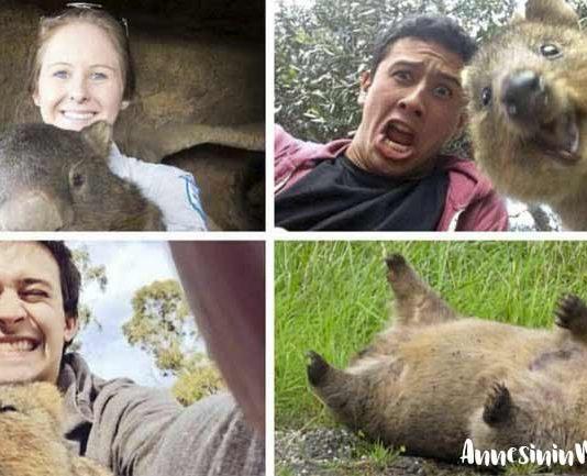 Avusturalya'ya özgü sevimli bir hayvan olan vombat, 4 türü olan keseli bir hayvandır ama onu en ilginç kılan yanı ise hayvanlar aleminde küp biçiminde dışkılayan tek canlı olmasıdır.