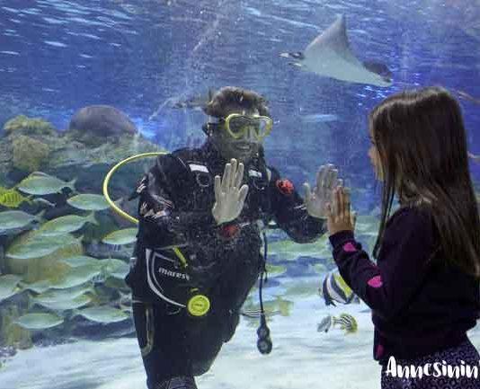 Emaar Akvaryum ve Sualtı Hayvanat Bahçesi, sömestr tatili bitmeden aileleri keyifli bir gün geçirmeye davet ediyor. Çocuklar birbirinden eğlenceli aktiviteler ve besleme seansları ile hem eğlenip hem öğrenirken, anne babalar da akvaryumun büyülü dünyasını keşfetme şansı yakalıyor.